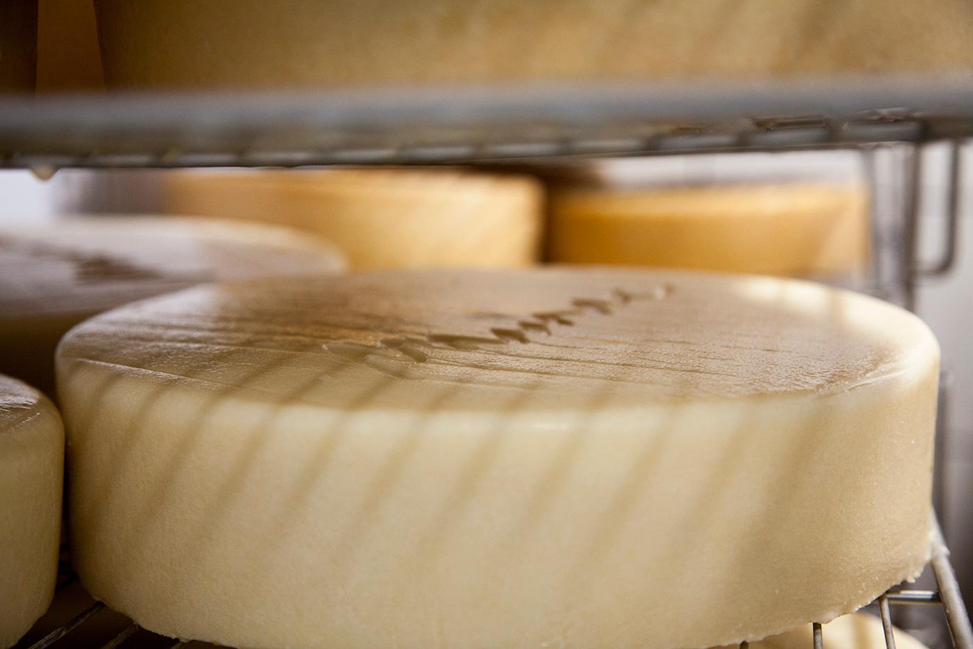 Fotografia formatge artesanal mujal